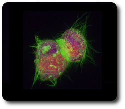 Cell Dividing in Suspension
